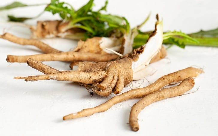 chicory-root-3