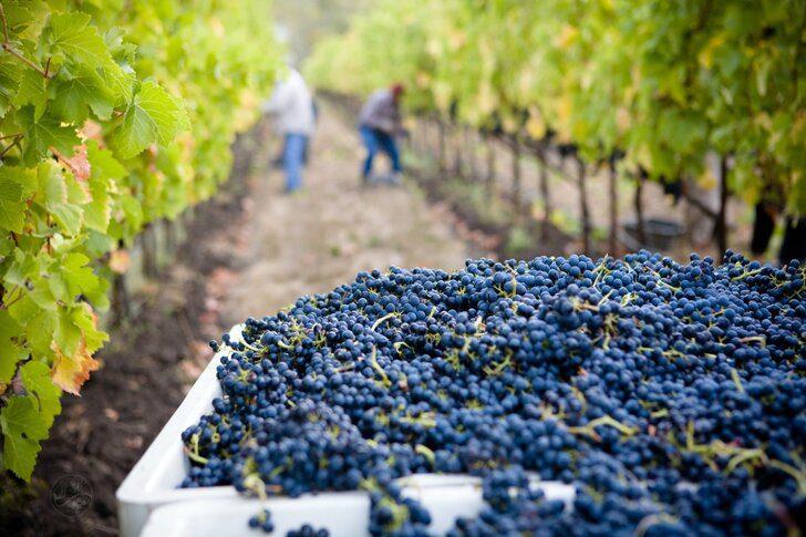 winemaking-1